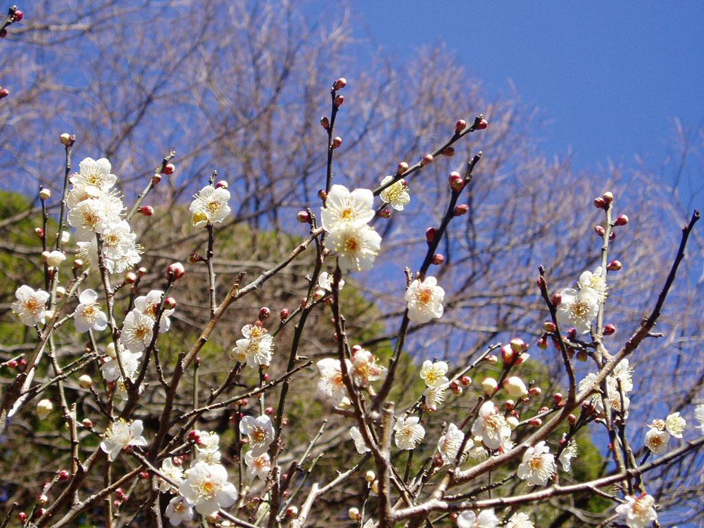 日本一早咲きの梅で知られる熱海梅園は車で約10分。