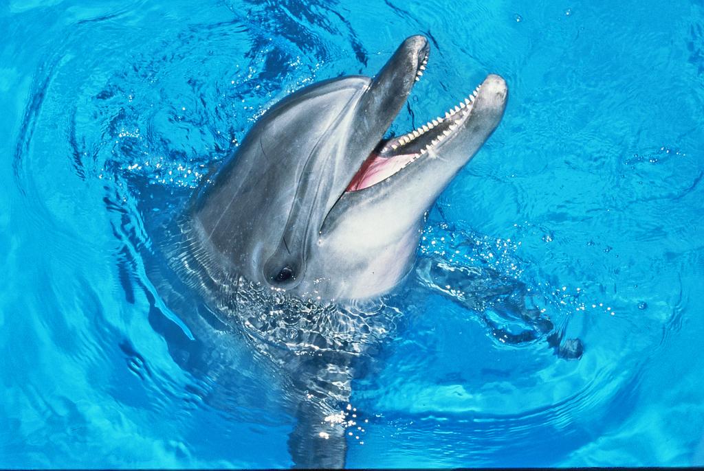 京急油壺マリンパークではイルカやアシカやカワウソなどかわいい動物が待ってます!(イメージ)