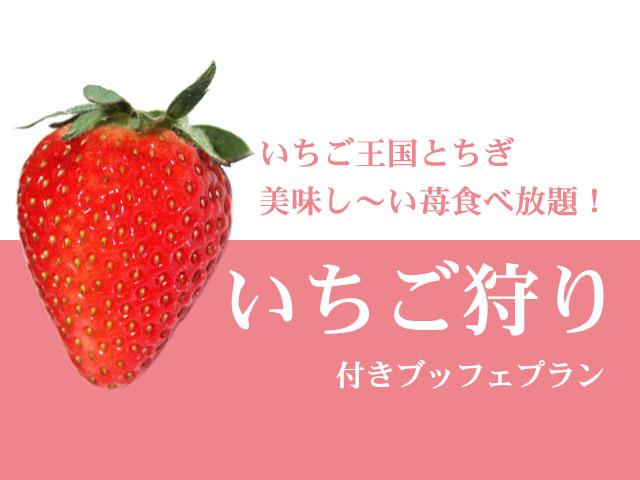 いちご王国とちぎで美味しい苺食べ放題