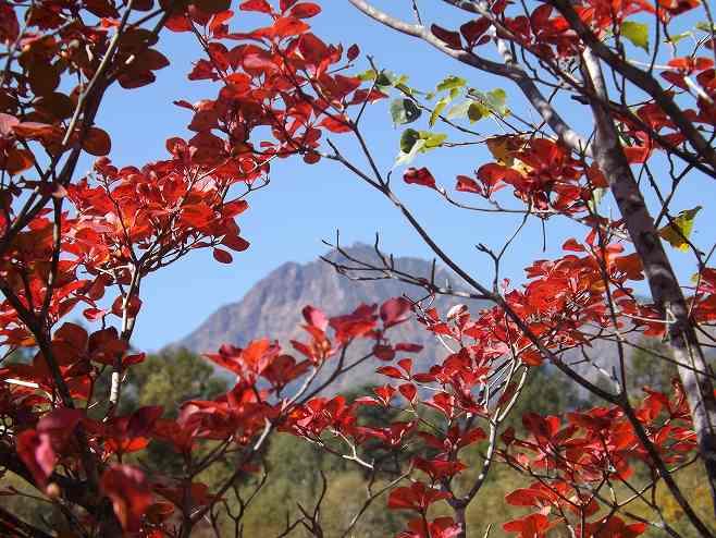 サラサドウダンの紅葉と赤岳