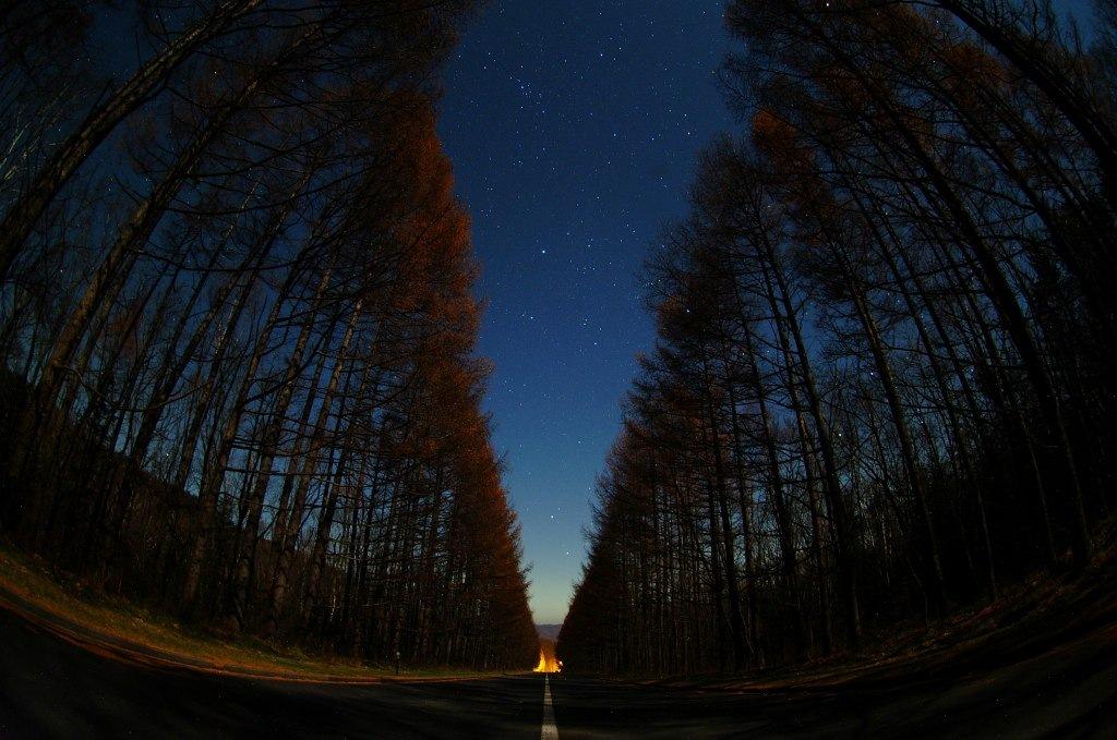 幹線道路カラマツ並木からの星空