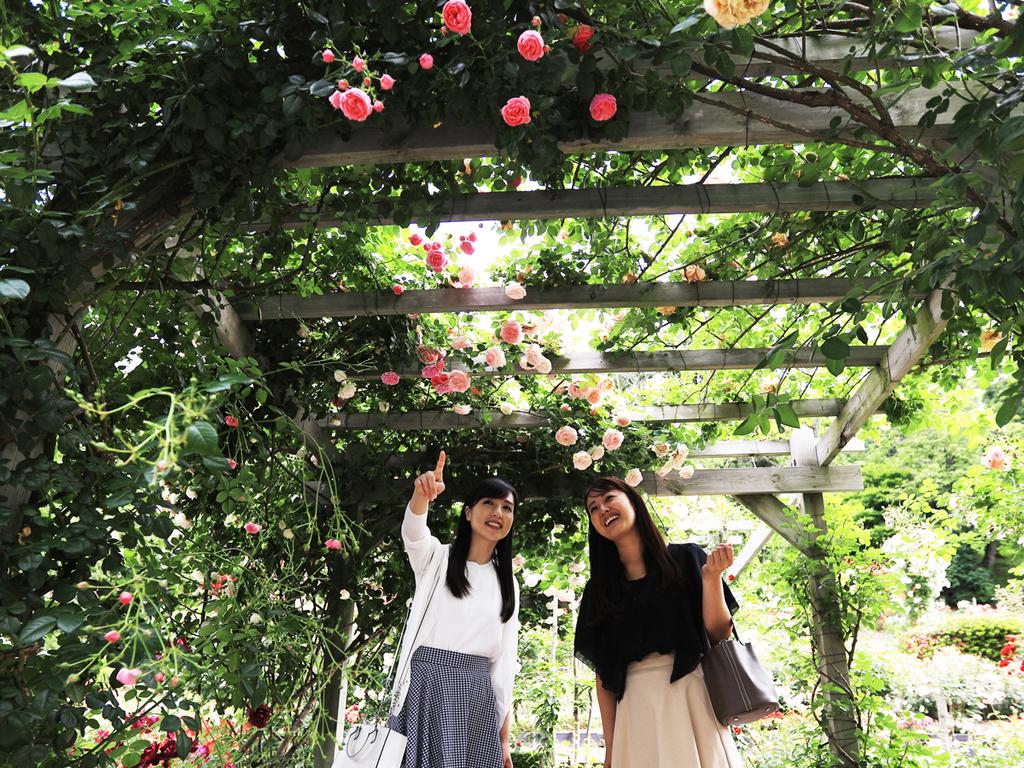 花巻温泉バラ園。開園60周年を記念して、今シーズンは宿泊者入園無料!