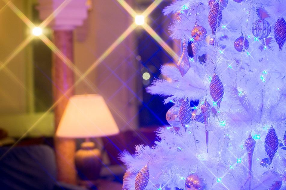 日帰りでクリスマスを満喫