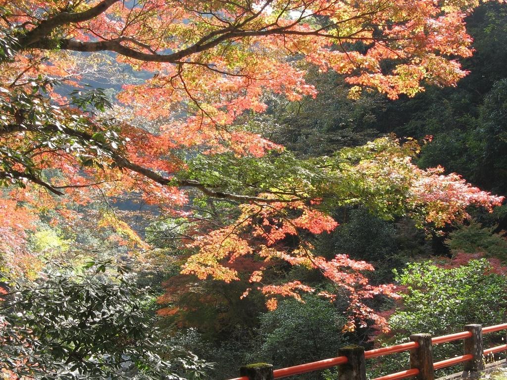 山野峡 紅葉