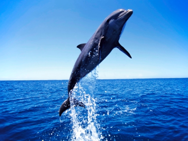 みんなに愛される海のほ乳類!イルカのかわいい高画質な画像まとめ!