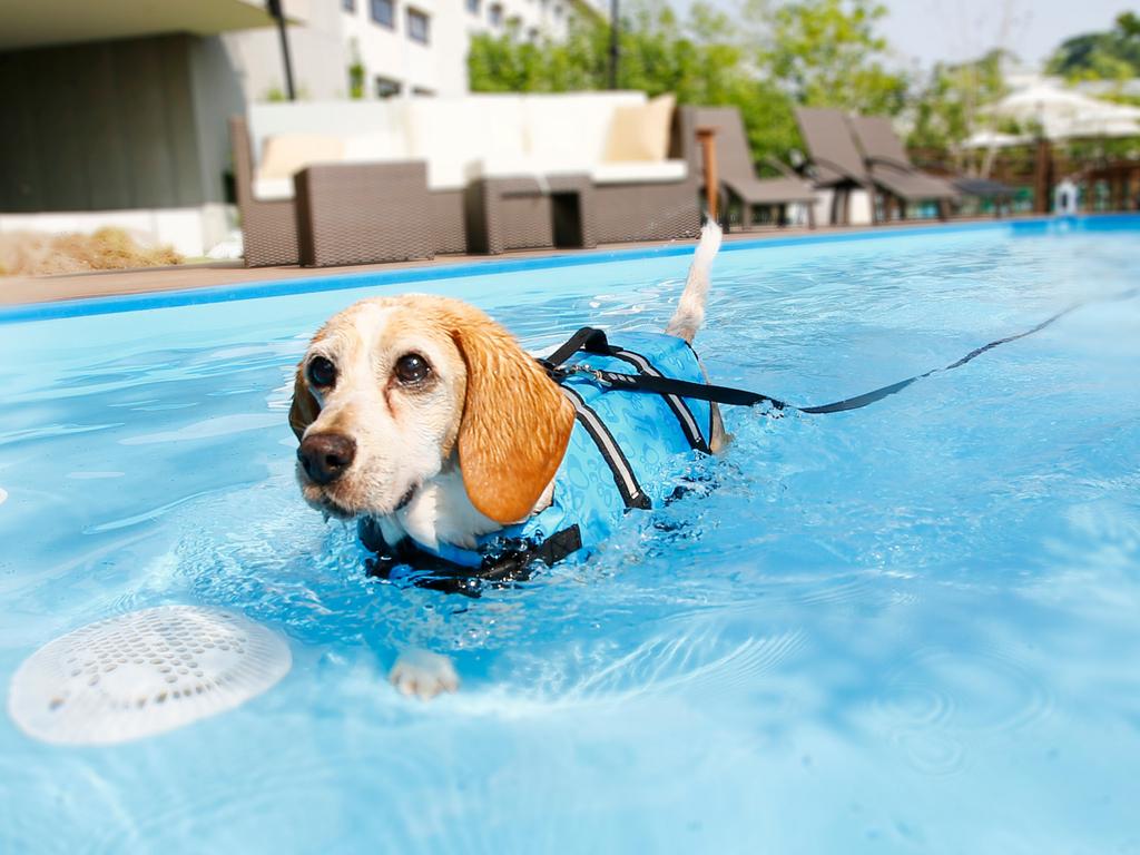 ワンちゃんものびのび泳げるプール♪水浴びでリフレッシュ!