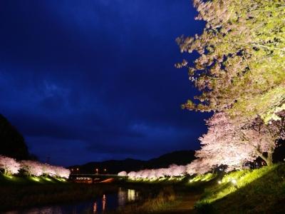2/10〜3/10_早咲の桜を愛でる桜まつり開催