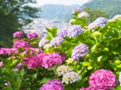 【歳時記】6月1日からは300万輪の紫陽花を愛でるあじさい祭がスタート