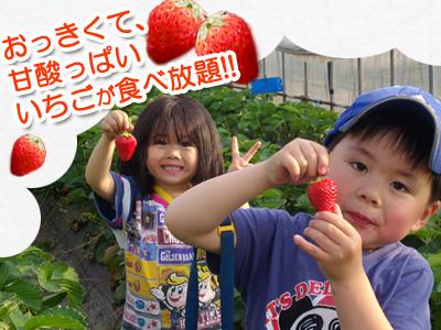 春の伊豆で甘酸っぱい『いちご狩り』を楽しもう