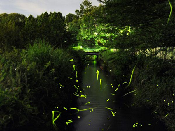 ホタル鑑賞スポット:当館庭園横に流れる小川/徒歩1分