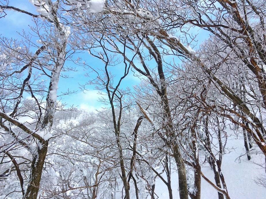 「綿向山」〜美しい霧氷をご覧頂けます〜