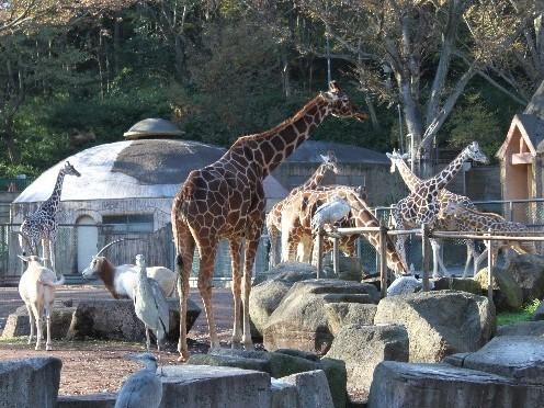 大自然溢れる多摩動物公園