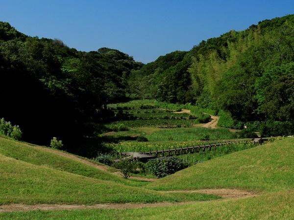【森】見渡す限りの「NEMUの森」。緑の香りと風を感じてください。