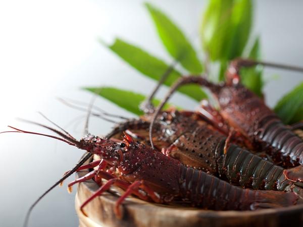 【ご夕食】「特別懐石〜伊勢海老堪能コース〜」をご用意 ※写真はイメージです