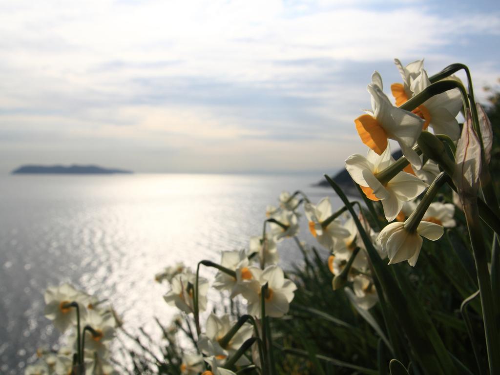 淡路島の冬の風物詩「灘黒岩水仙郷」の入場券をもれなくプレゼント