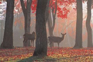 紅葉なら公園