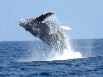 ◆ホエールウォッチング付◆冬のオキナワでクジラに恋する♪2泊3日≪朝食付≫
