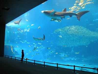 ツアー一番の見所★美ら海水族館★