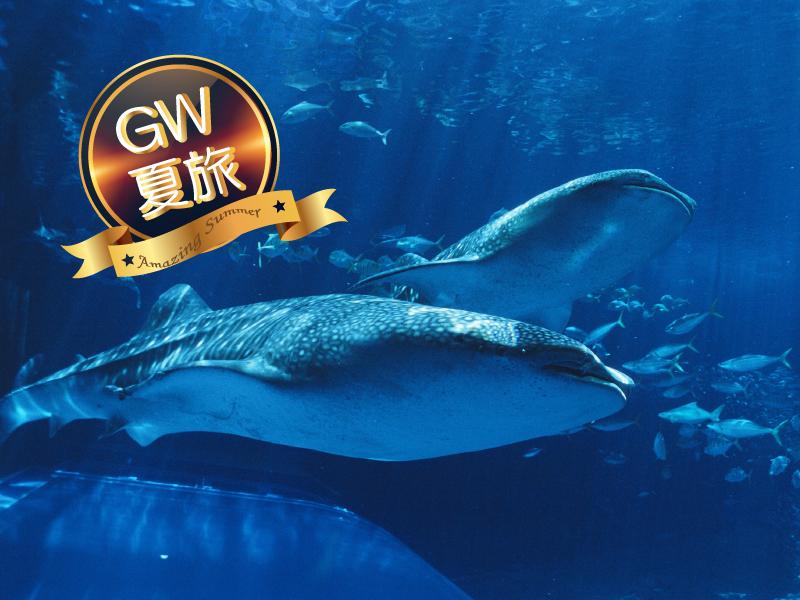 2018年GW&夏旅2連泊以上水族館チケット付プラン#800