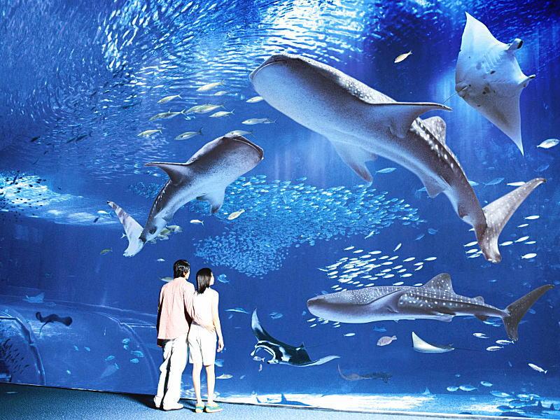 美ら海水族館メインスポット「黒潮の海」