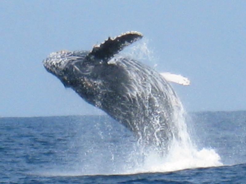 「冬の感動体験」クジラに会いに行こう!