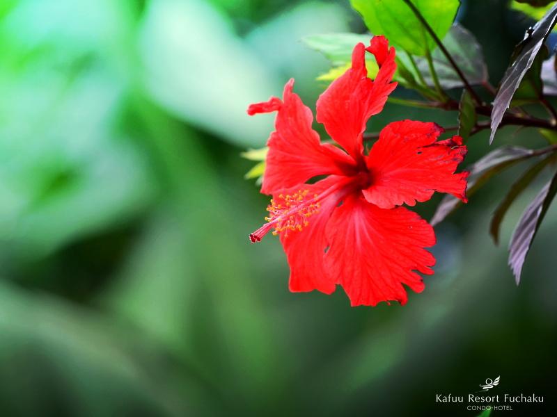 一年を通して咲き乱れる沖縄の花々