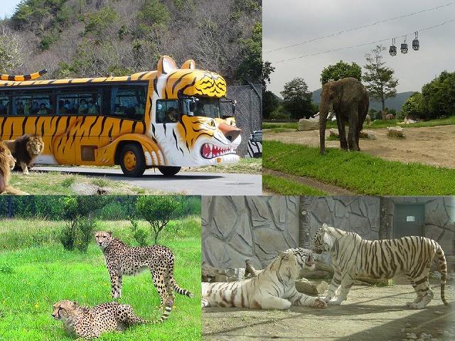 「マイカー」で廻れて間近で見れる動物たちの迫力にワクワクドキドキ!♪のドライブスルーサファリ。
