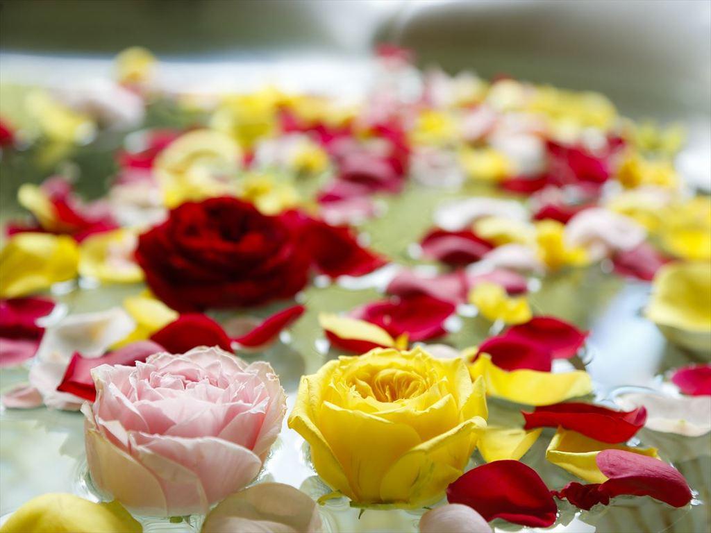 色とりどりのバラの花びらを露天風呂に浮かべて、高貴な香りに包まれて華やかな癒しのひとときをお過ごし下さい。