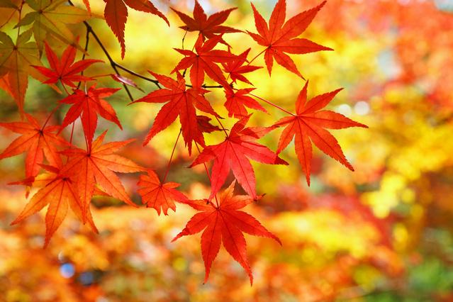 秋のご旅行は小倉ベイホテル第一をご利用下さい♪