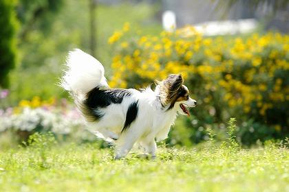 愛犬と過ごす癒しの休日♪愛犬と一緒に癒しの時間を満喫してみませんか?