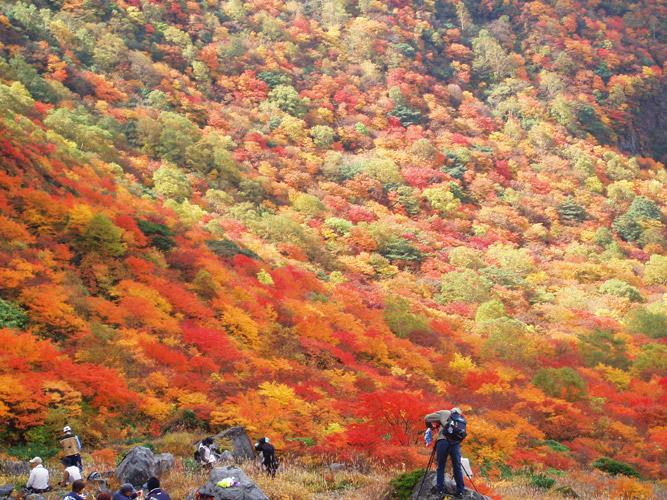 茶臼岳/牛ヶ首周辺(10月初旬)