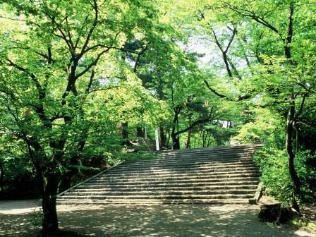 新緑の千秋公園