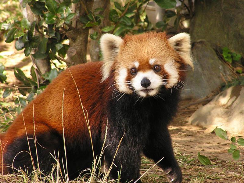 宮崎フェニックス自然動物園