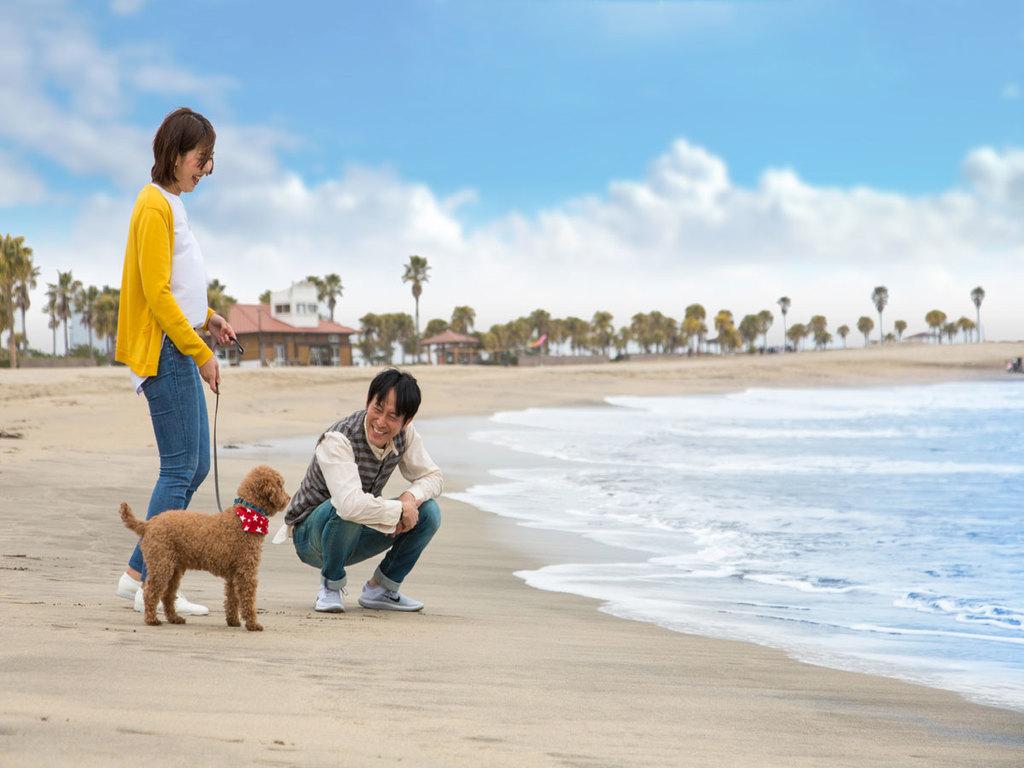 海岸まで散歩