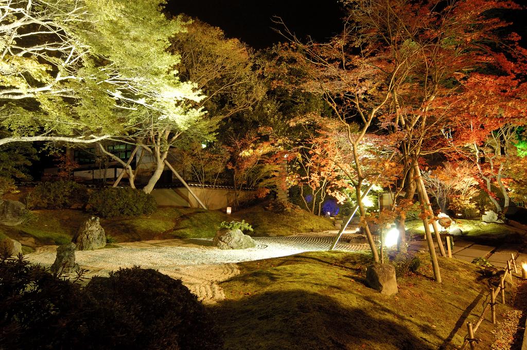 秋の夜長を幻想的に松島観光をお楽しみいただけます