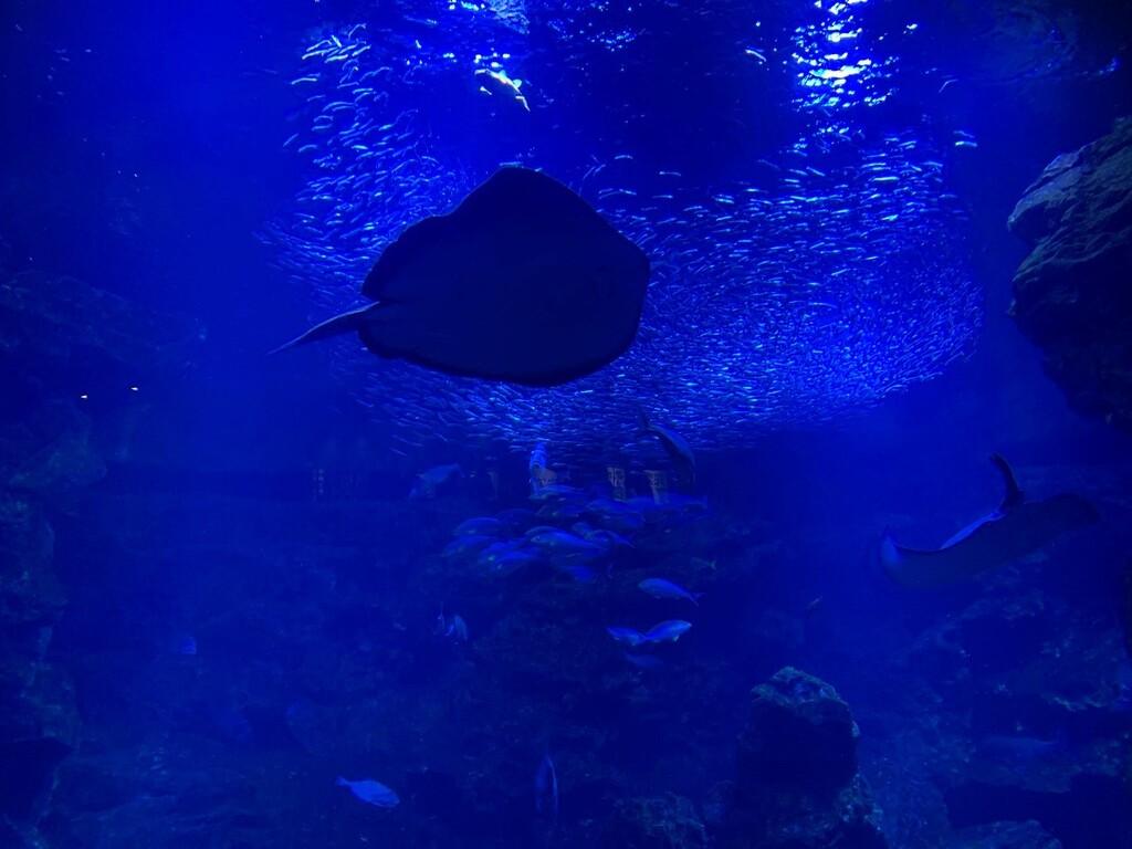 京都水族館。エイやオオサンショウウオなどの定番どころから