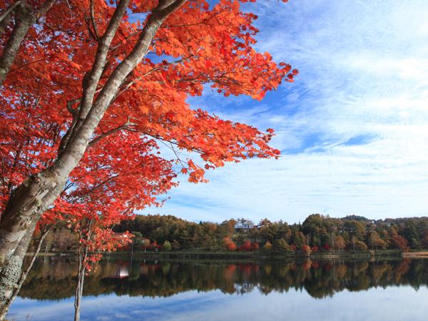 女神湖も秋の装い