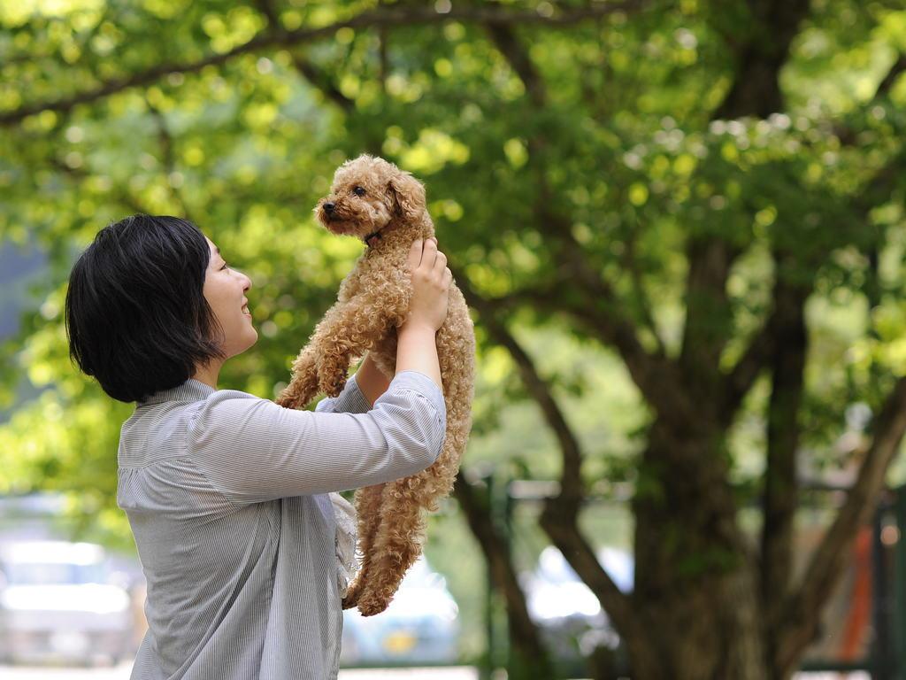 愛犬と旅行