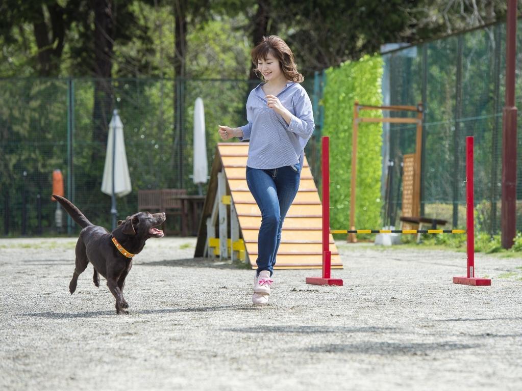 【ドッグラン】小型犬〜大型犬までみんな思いっきり走り回ってます♪(当日12時より利用OK)