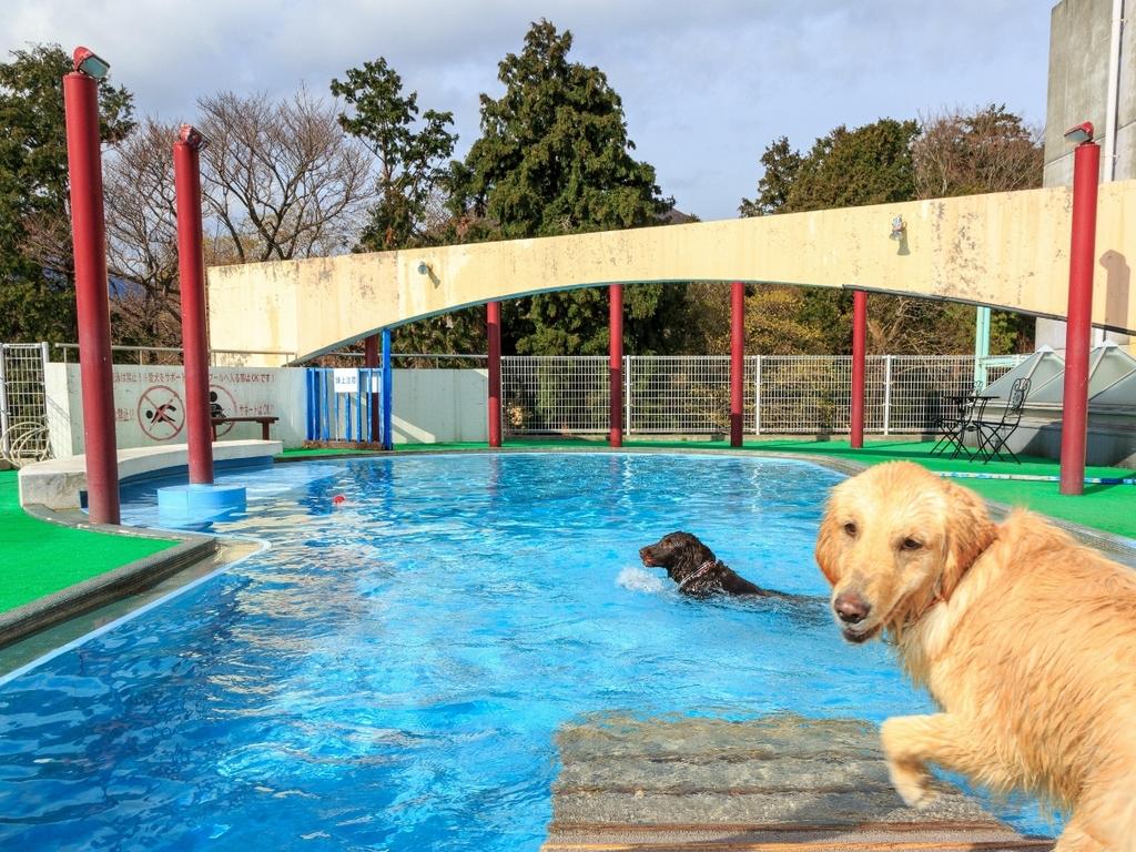 【プール】愛犬と水遊び♪