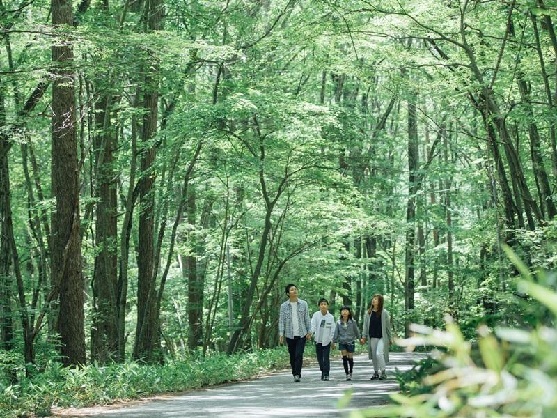 グリーンシーズンは、木々の緑に癒されます♪