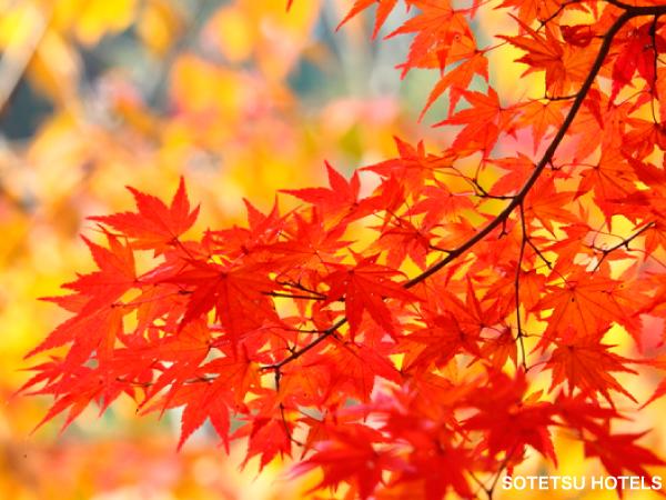 秋の安芸旅