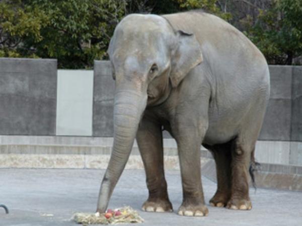 いしかわ動物園 象