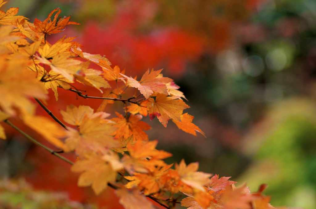 紅葉シーズンにおすすめのプラン