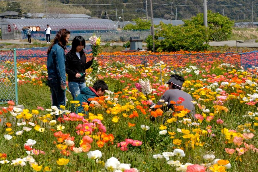 南房総のお花摘み畑