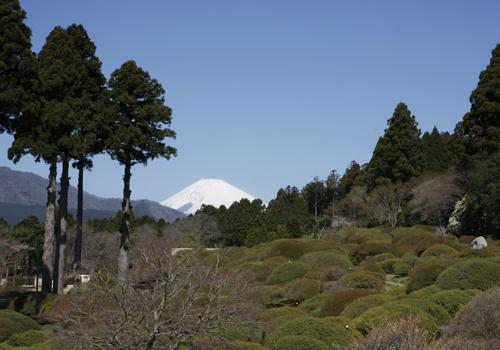 庭園からの富士山の雄姿