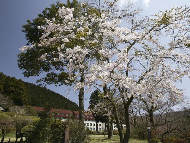 春の庭園散策では、こんなショットも見られます。