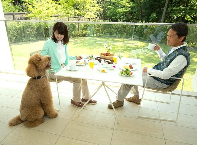 愛犬と一緒にお部屋でお召し上がりいただけるよう、朝食・夕食共に専用の料理をご用意しております。