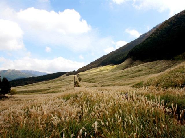 すすき草原は黄金色の絨毯のように変わっていきます