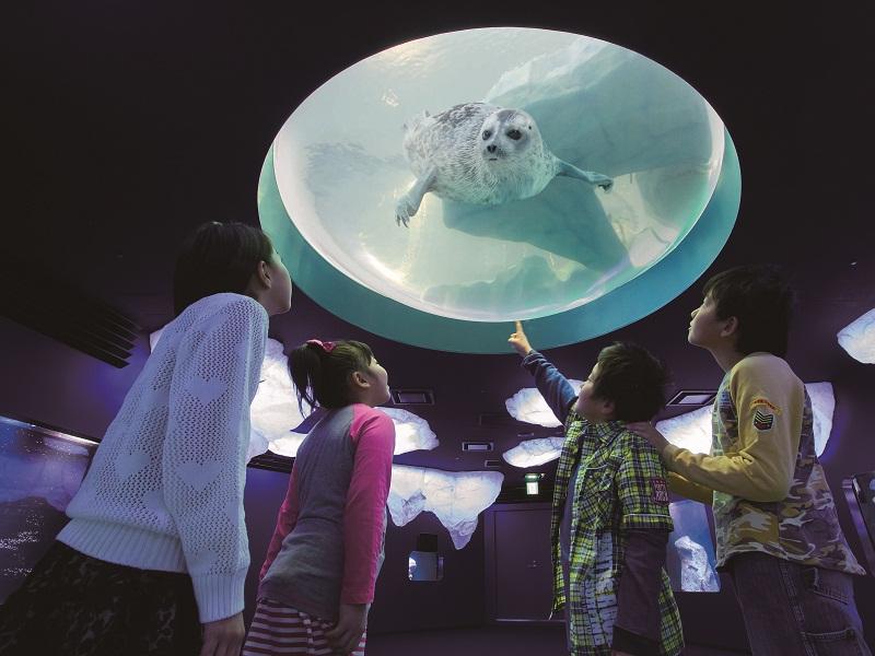 新・体感エリア 北極ゾーン ※画像はイメージです